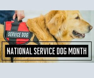 National Guide Dog Month